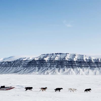 Dogsledding in Svalbard
