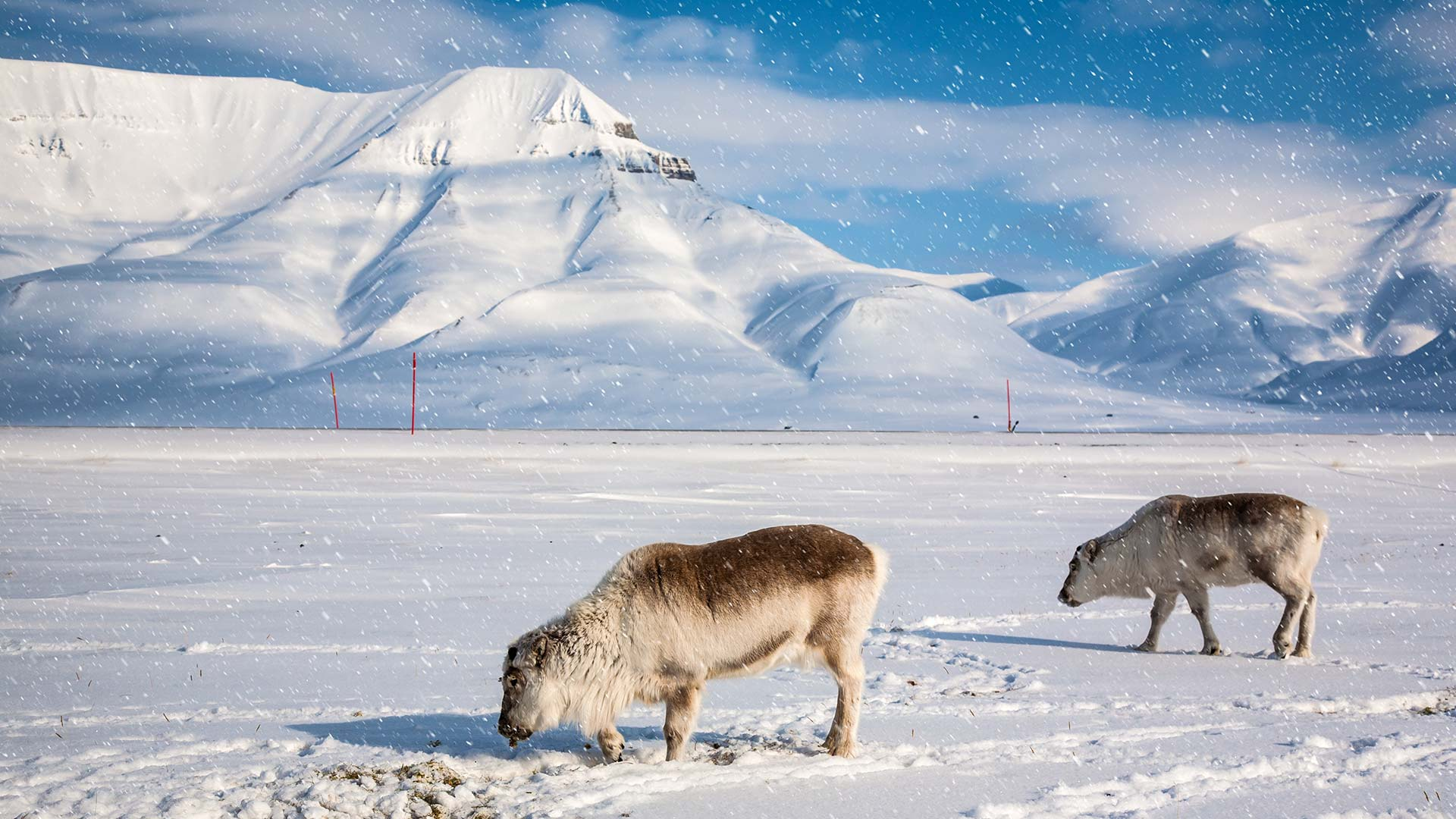Winter World in Svalbard - 4 Days 3 Nights - Nordic Visitor Pictures